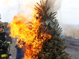 Christmas Tree Taunts Us