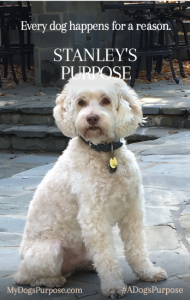 Love Dogs? Try A Dog's Purpose Stacey Gustafson